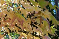 Red and yellow leaves in autumn. Close up Stock Photos