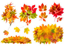 Red and yellow leaves. Autumn nature objects set Royalty Free Stock Image