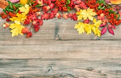 Red yellow leaves berries Autumn background. Vintage style. Red yellow leaves and berries. Autumn background. Vintage style toned picture Royalty Free Stock Photo