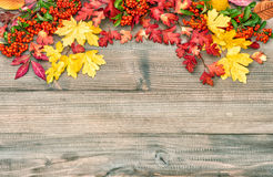 Red yellow leaves and berries on wooden background. Autumn. Red yellow leaves and berries on rustic wooden background. Autumn composition. Vintage style toned Stock Photo