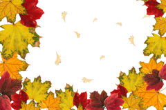 Red and yellow leaves. Blank frame: red and yellow leaves on white background Stock Images