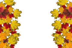 Red and yellow leaves. Blank frame: red and yellow leaves on white background Royalty Free Stock Photo