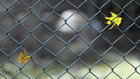 Separation concept image of leaves on fence stock images