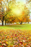 Red and yellow leaves. On the grass in park Royalty Free Stock Photos