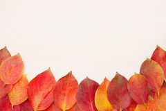 Red-yellow leaves on a light board Royalty Free Stock Photo