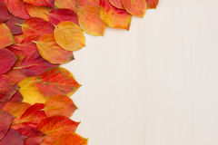 Red-yellow leaves on a light board Royalty Free Stock Photography