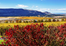 Red Yellow Leaves Vineyards Red Mountain Benton City Washington Royalty Free Stock Photos