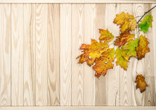 Red yellow leaves wooden texture. Autumn background. Red yellow leaves on rustic wooden texture. Autumn background stock photos