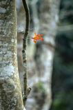 Red-yellow maple leaf on the  trunk Royalty Free Stock Photo