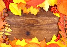 Red and yellow maple leaves on wood background Stock Photos