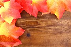 Red and yellow maple leaves on wood background Stock Image