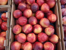 Red and yellow Nectar fruit in boxes. Pile of Red and yellow Nectar fruit in boxes next to each other Royalty Free Stock Image