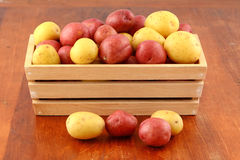 Red and yellow new potatoes Royalty Free Stock Image
