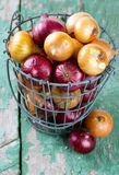 red and yellow onion Stock Photos