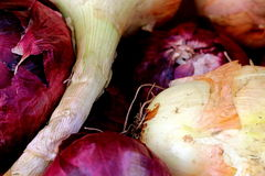 Red and Yellow Onions. Onion roots and onion skins Stock Photo