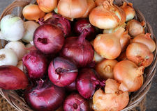 Red and yellow onions for sale at the market Royalty Free Stock Photos
