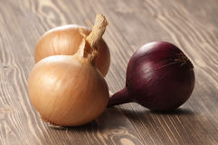 Red and yellow onions Stock Image