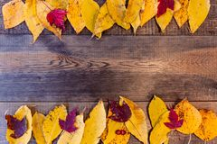 Autumn background with colored leaves on wooden board royalty free stock images