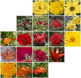 Red, yellow and orange floral collage of flowers. Red, yellow and orange floral collage of complex shape royalty free stock image