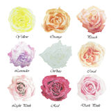 Red,yellow,orange,lavender,coral,pink Watercolor floral summer,s Royalty Free Stock Photos