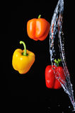 Three peppers water splash on black Royalty Free Stock Photography