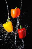 Three peppers water splash on black Royalty Free Stock Image