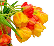 Red, yellow and orange tulips flowers, floral arrangement, close up, isolated, white background Royalty Free Stock Photo