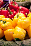 Red and yellow paprika Royalty Free Stock Image