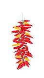 Red and yellow paprikas on rope. Illustration from red and yellow paprikas on rope Royalty Free Stock Images