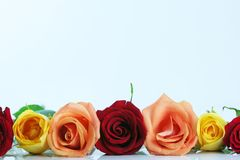 Red, yellow and peach color roses Stock Photography