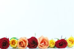 Red, yellow and peach color roses