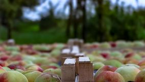 Peaches in the boxes. Red and yellow peaches in some wood boxes Stock Photography