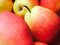 Red yellow pears close-up full frame Royalty Free Stock Images