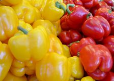 Red and yellow peppers. Fresh red and yellow peppers Stock Photos