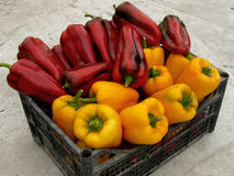 Red and yellow peppers Royalty Free Stock Photo