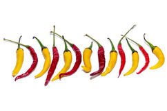 Red and yellow peppers in isolation Royalty Free Stock Photo