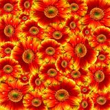 Red and Yellow Petaled Flower Stock Images