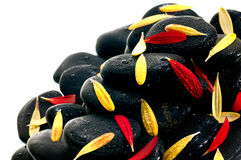 Red and yellow  petals on black zen stone close up Royalty Free Stock Photography