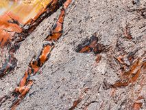 Red and Yellow Petrified Wood Texture. Close up view of a chunk of Petrified Wood. Really liked how the red and orange and yellows streak through the coarse Stock Photography