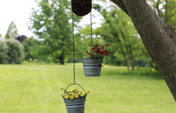 Red and Yellow Petunias in metal buckets. Hanging on a tree branch Royalty Free Stock Photo