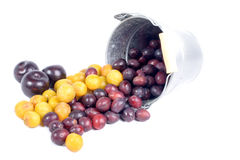 Red and yellow plums into a small bucket Royalty Free Stock Photos