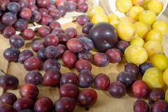 Red and yellow plums Royalty Free Stock Image
