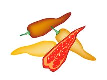 Red and Yellow Poblano Chili on White Background Royalty Free Stock Photos
