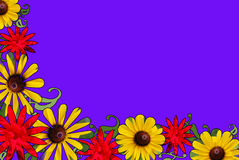 Red, Yellow, and Purple Floral Border. A border of red rose and black eyed susan pictures cut into shapes Royalty Free Stock Photography
