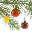 Red, Yellow, and Purple Tomato. Red, yellow, and purple cherry tomatoes as a Christmas tree ornament (6367 Royalty Free Stock Photography
