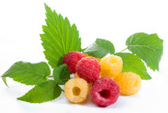 Red and yellow raspberries. Mixed raspberries with leaves isolated on white background Royalty Free Stock Photo