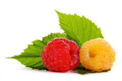 Red and yellow raspberries Royalty Free Stock Image