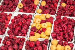 Red and yellow raspberries in boxes at local farm market Royalty Free Stock Images