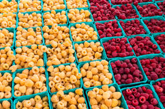 Red and yellow raspberries in boxes. Raspberries red and yellow in small boxes at the market Stock Photos