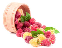 Red and yellow raspberries in wooden bowl isolated on white. Yellow and red raspberry with leaves spilled from a wooden bowl isolated on white background Royalty Free Stock Images